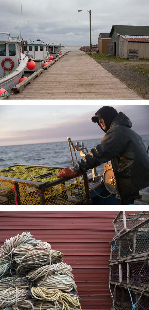 Lobster Island eBook