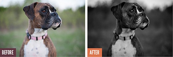 Before and After Lightroom Processing