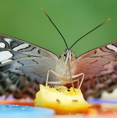 Butterfly Photography Tips