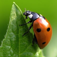 Insect Photography Tips