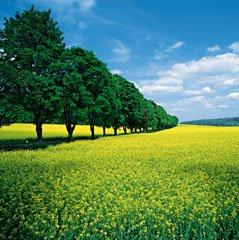 Landscape Photography Tips