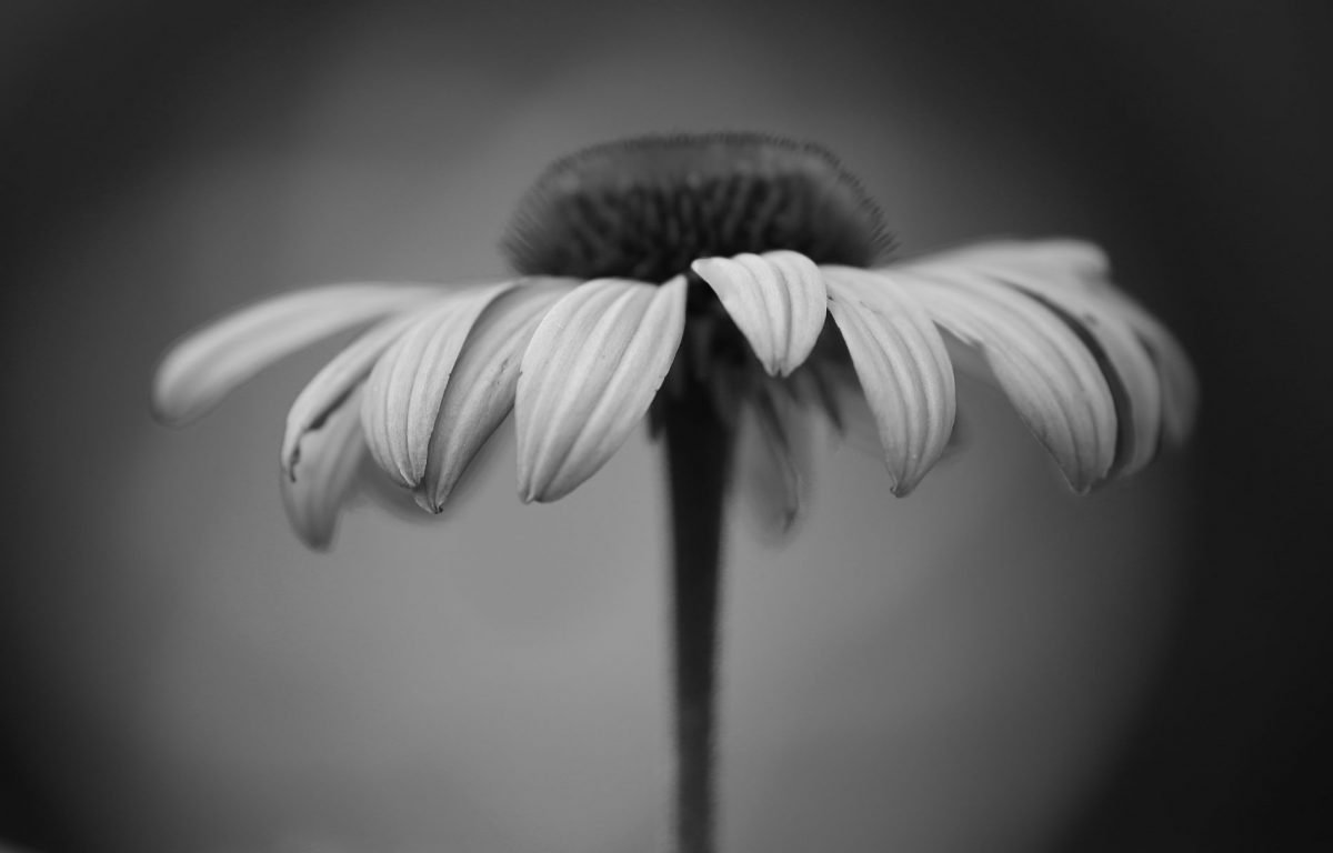 Taking a black and white photo in the digital age exposureguide photograph by gurushots member thomas patrice bw macro challenge mightylinksfo Image collections