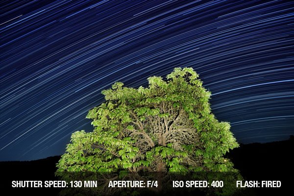 Long exposure of star trails passing by an illuminated tree