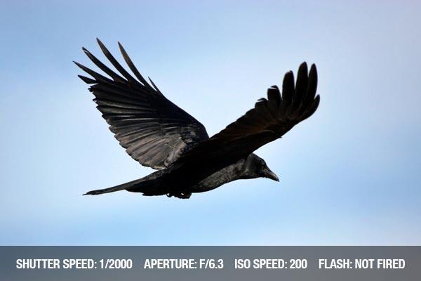 Black bird flying in the sky
