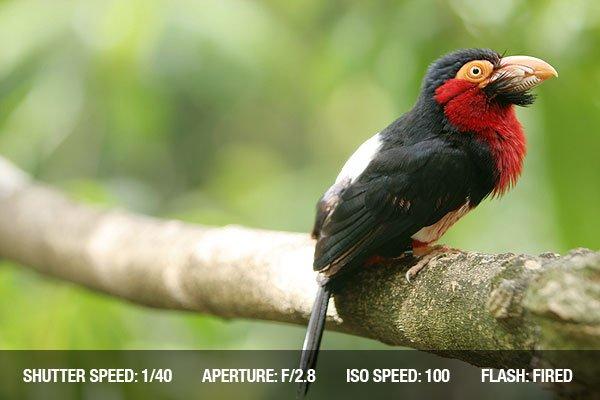 Con vẹt xinh đẹp trên cành cây