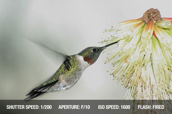 Tiếng chim hót vo ve trước bông hoa màu đỏ vàng