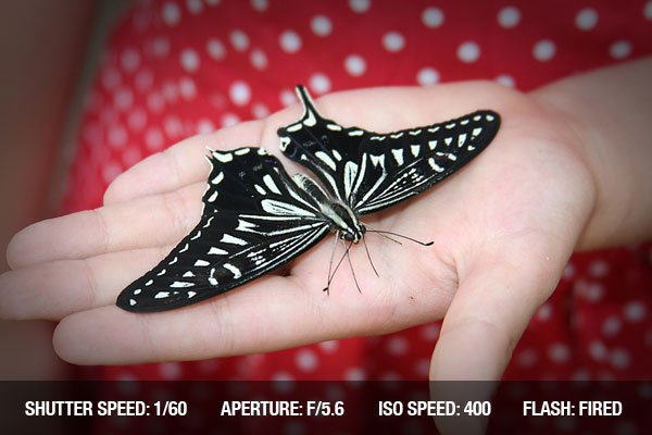 Big Butterfly on a Child Hand