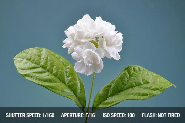 Jasmine flowers on sad background