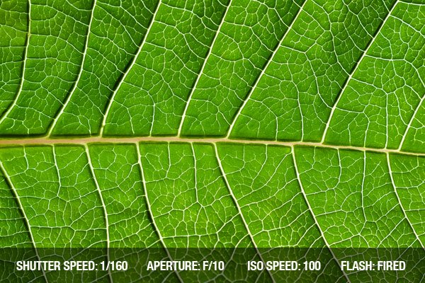 Close up of green leaf - focused in the centre of the frame