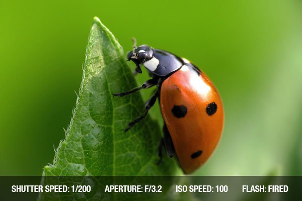 Photographing insects-1