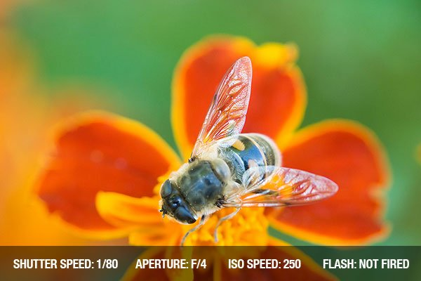 Bee on a red flower