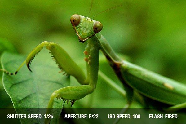 Portrait shot of a praying mantis on leaves