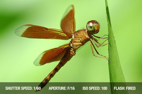 A dragonfly rests on a blade of grass