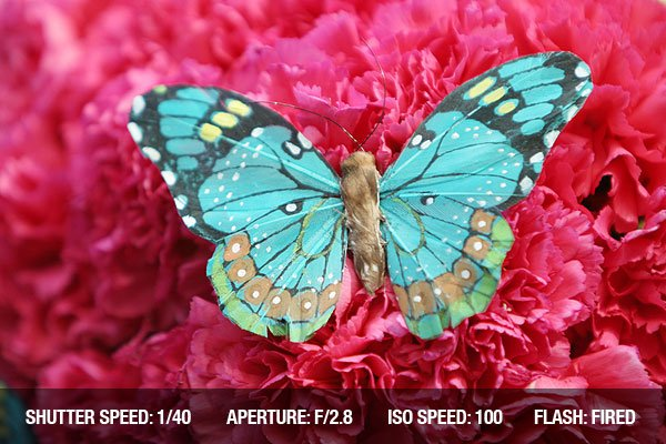 Beautiful butterfly on red carnations close-up
