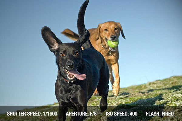 Photographing Running dogs