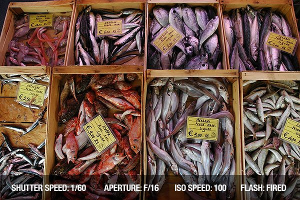 Street Photograph of Fresh fish on a market in Italy
