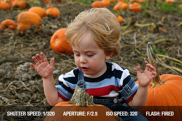 Thanksgiving Photography - A toddler looks at a pumpkin in a pumpkin patch