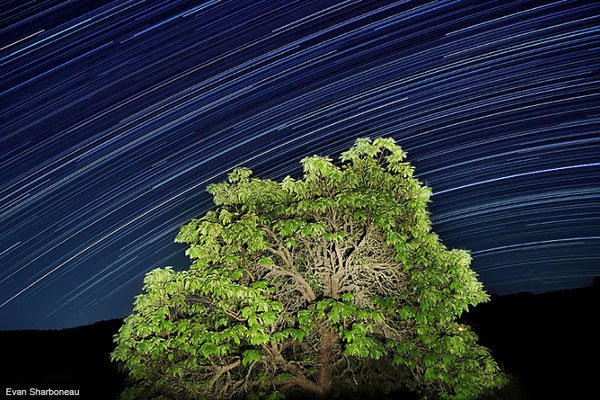 Star trails long exposure with tree photograph