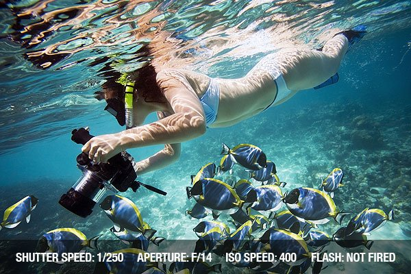 Underwater Photography - Underwater life. Girl swimming with fishes